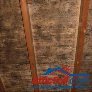 Black mold caused by moisture accrual